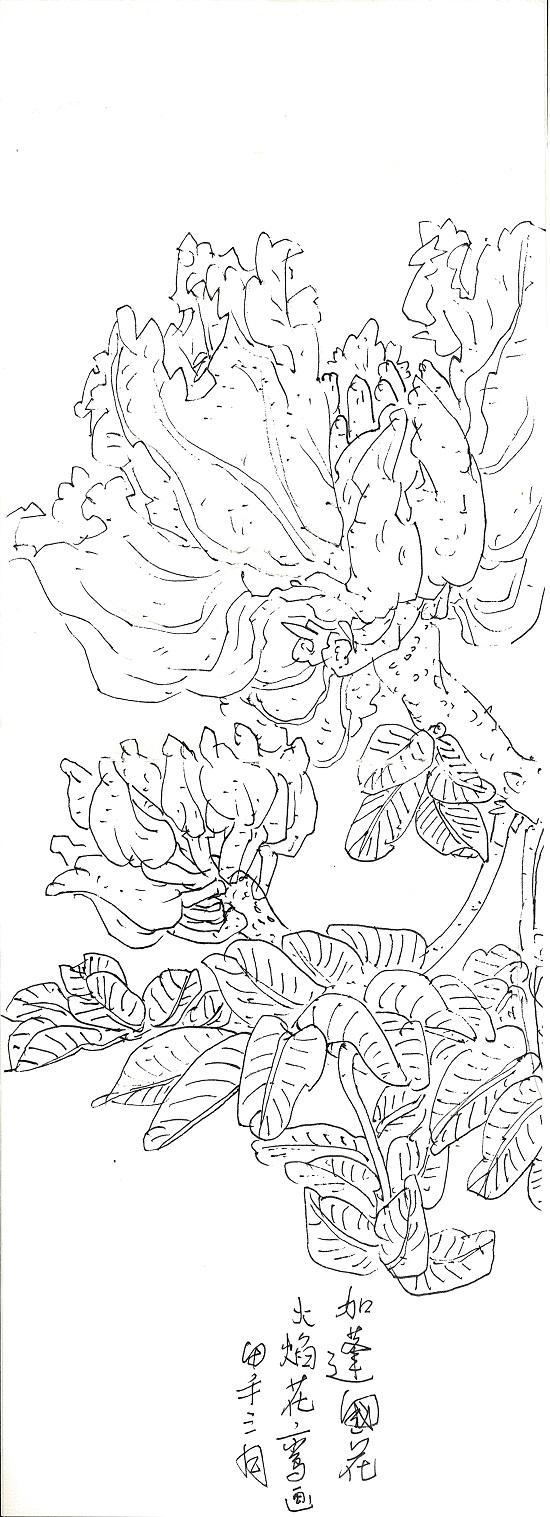神树·幽花--张鉴热带雨林写生集