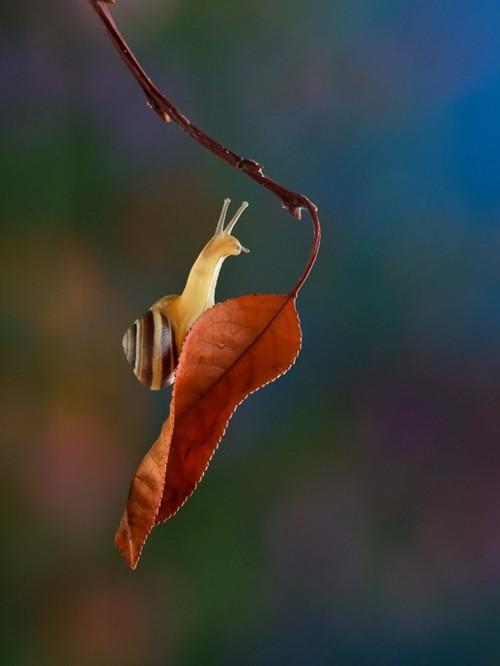 带来的一组关于软体小动物——蜗牛——的微距摄影